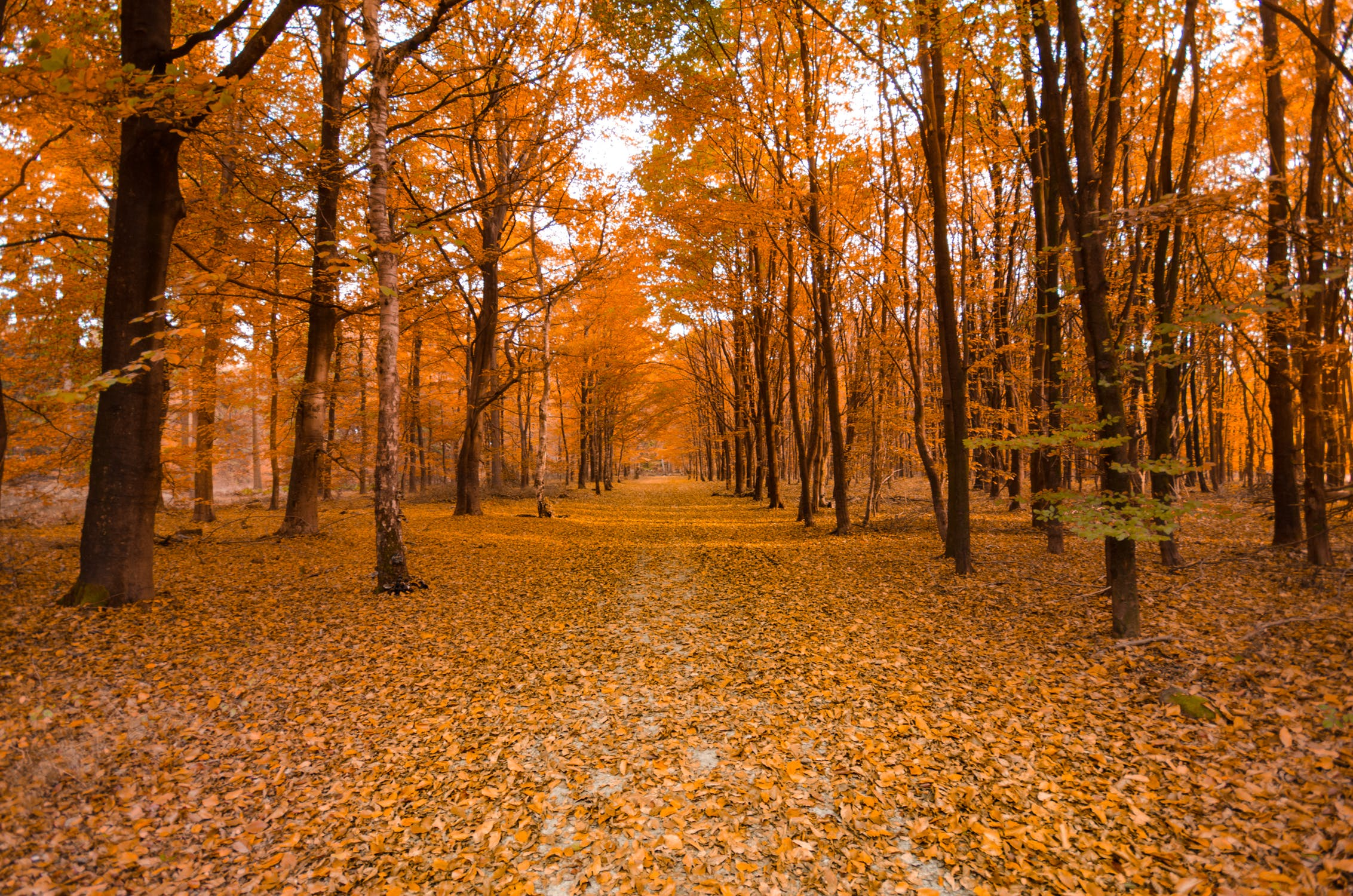 forest-autumn-orange-colorful-699624